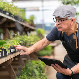 Man in a cap and glasses holding a tablet and looking at crops in a nursery