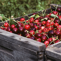 Macro level image of a box of red cherries