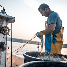 Man holding fish in a net on a fishing vessel